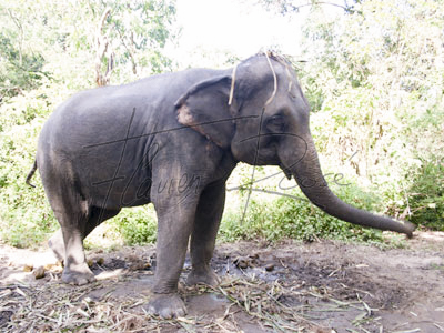 Locations in Thailand: Elephants