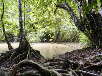 Locations in Thailand: Jungle